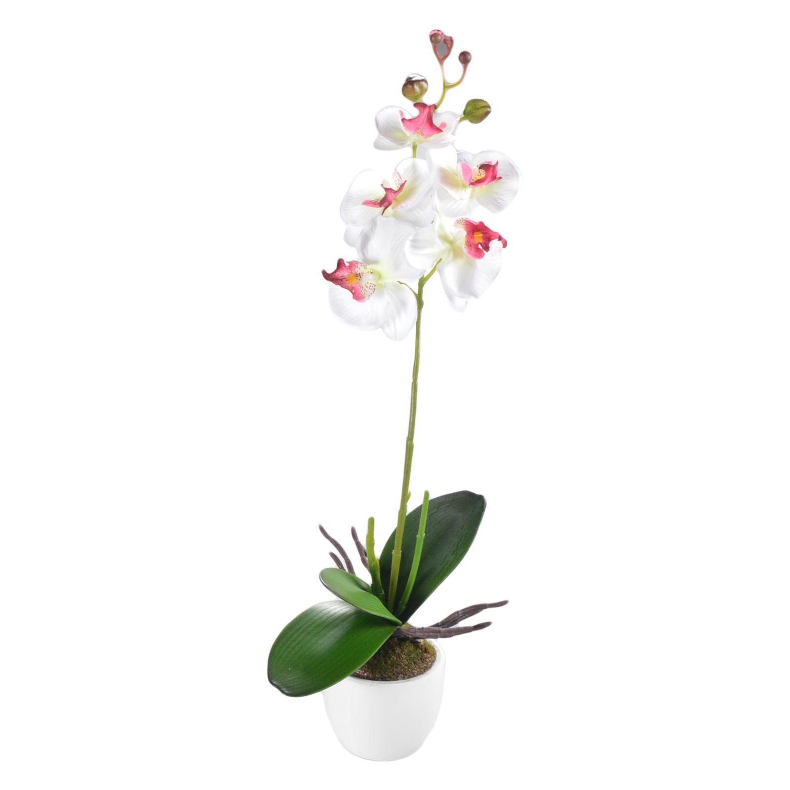 50 cm orchidee k nstlich orchidee im topf k nstliche. Black Bedroom Furniture Sets. Home Design Ideas